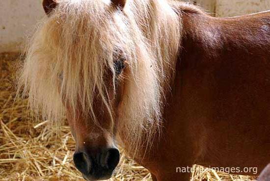 Horse in Spain
