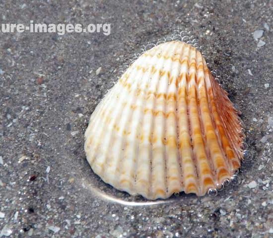 Orange Shell on a beach