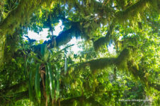 Moos On Trees